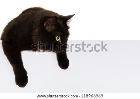 Black cat with a sheet of paper - stock photo