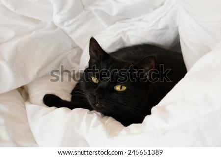 Black cat with dissatisfied muzzle - stock photo