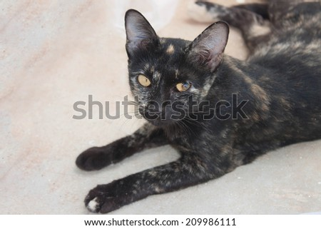 Black cat with eye problems. A cat of many colors - stock photo