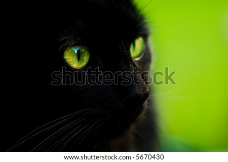 Black cat with green eyes - stock photo
