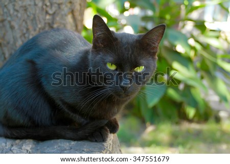 Black cat with green eyes on a background of summer foliage looks into the camera. 