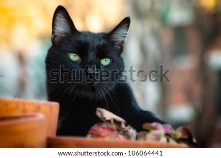 Black cat with green eyes on a rooftop - stock photo
