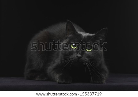 Black cat with green eyes on black background - stock photo