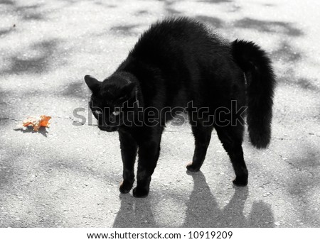 black cat with haunches up - stock photo
