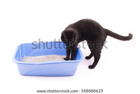 Black cat with her front paws in a blue litter box, on white - stock photo
