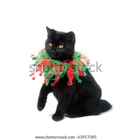 Black cat with red and green collar on white background