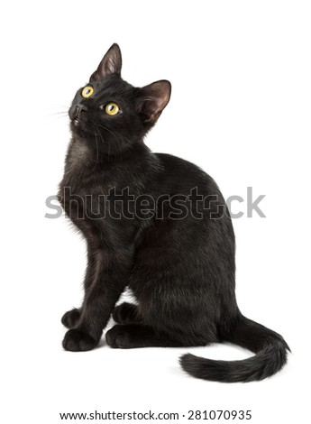 black cat with yellow eyes on the cute face - stock photo