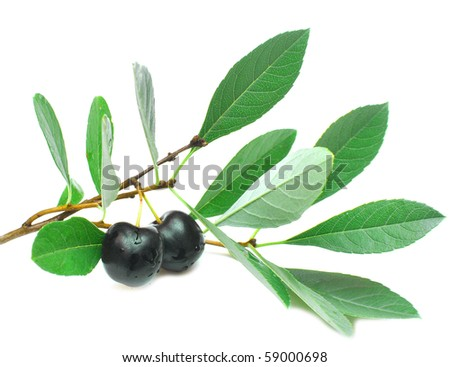 black cherry with leaves on a white background