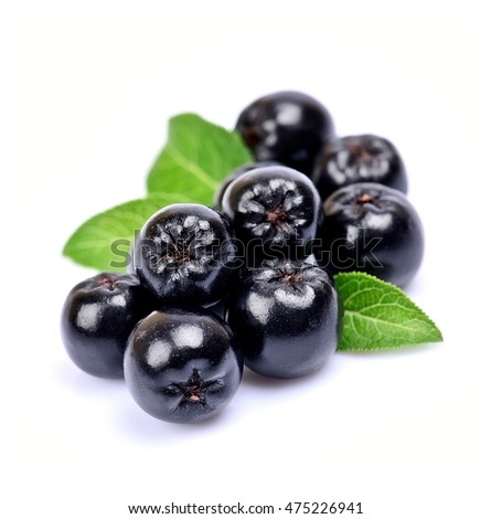 Black chokeberry close up. Black aronia berries.