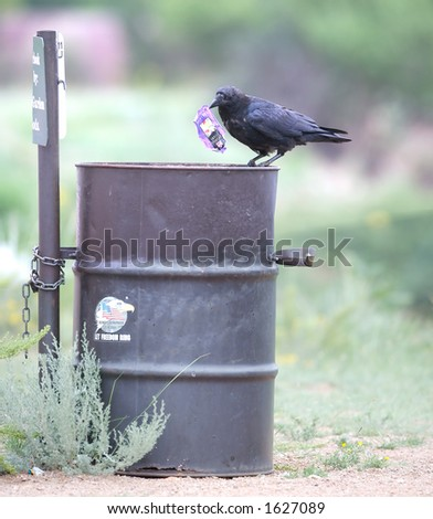 Black crow holding a wrapper on top of a public trash can - stock photo