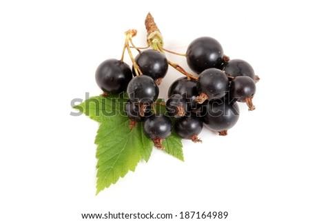 Black currant - stock photo