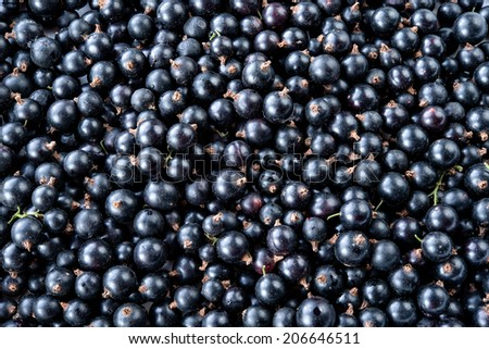 Black currant background