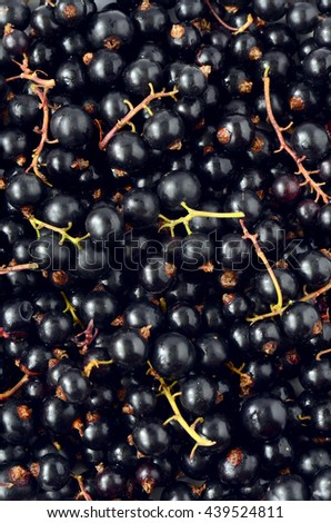 Black Currant berries Freshly picked from the garden