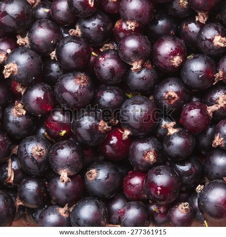 Black currant fuits as a background - stock photo