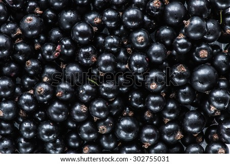 black currant top view