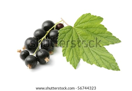 Black currant with leaves - stock photo