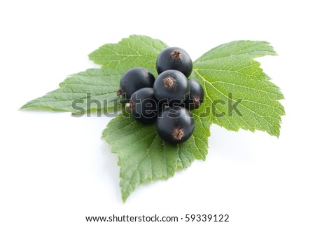 Black currant with leaves isolated on white