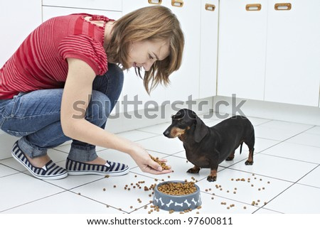 Black Dachshund dog awaiting command from young lady to eat - stock photo