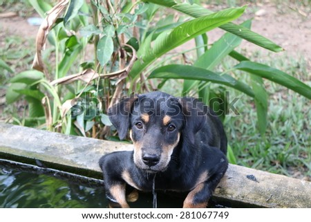Black Dog - stock photo