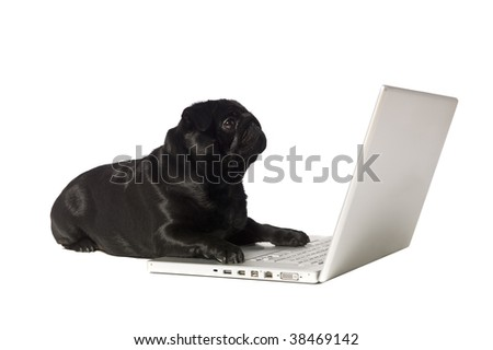 Black dog at the computer isolated on white - stock photo