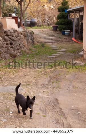 Black dog in the yard/Black dog in the yard - stock photo