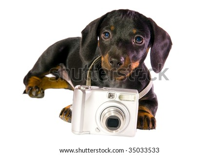 Black dog Lays with a camera on white background isolated close up... - stock photo