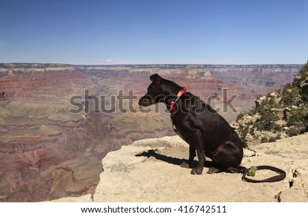 Black Dog Looks Into the Grand Canyon - stock photo