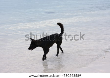Black dog on the beach.