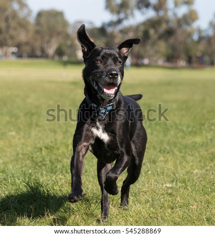 Black dog running in park 1