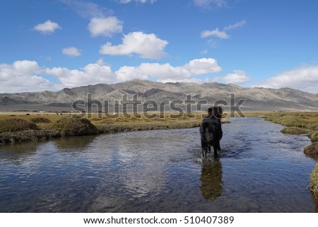 Black dog walking on water at canal waterfront, Mongolia