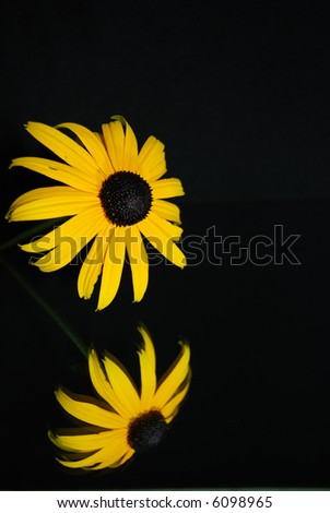 black-eyed susan reflected in mirror