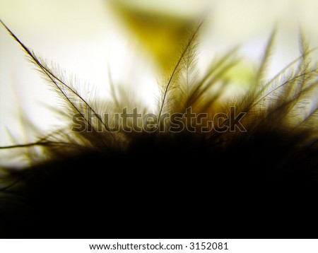 black feather - stock photo