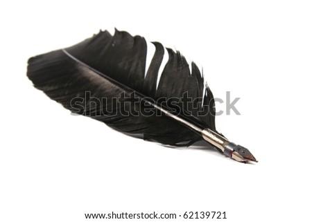 black feather isolated on white background - stock photo