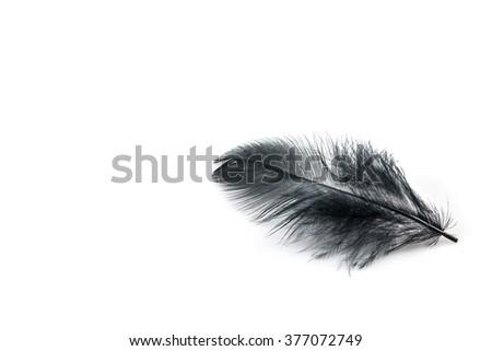 Black feather on a white background - stock photo