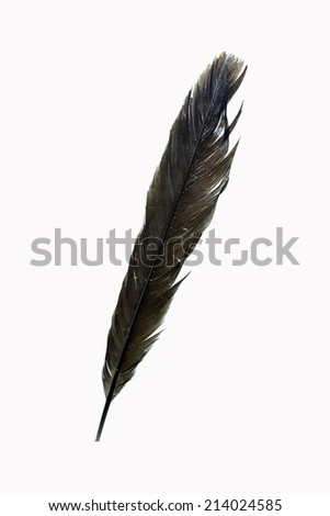 Black feather on the white background.