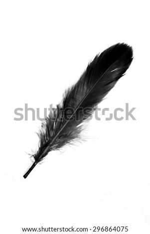 Black feather on white background. - stock photo