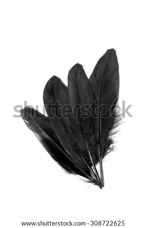 Black feathers on white background.