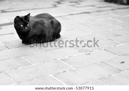 Black female cat alone on a concrete surface. Black and white