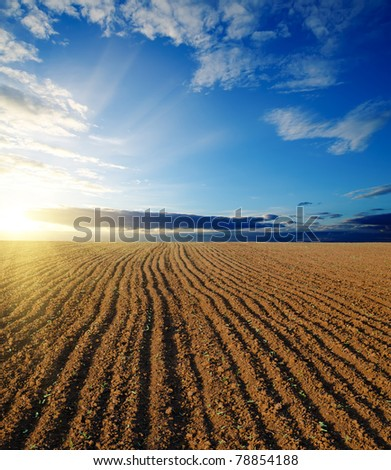 black field and sunset - stock photo