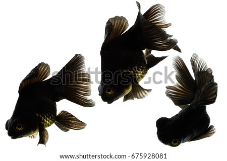 Black Fish in White background, Include Clipping part