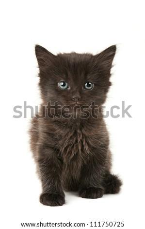 Black fluffy kitten isolated on white background - stock photo