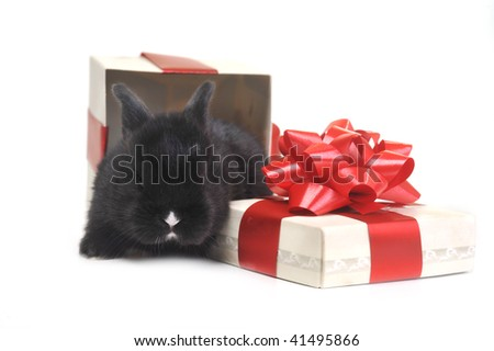 black  fluffy rabbit sits in  box for  gift - stock photo