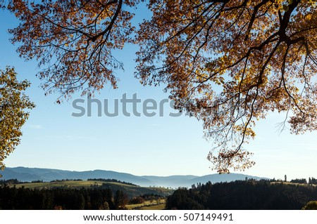 Black Forest View