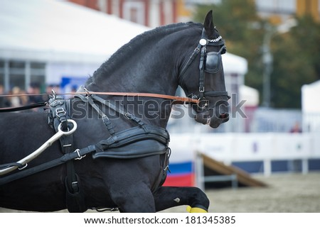 Black friesian horse carriage driving - stock photo