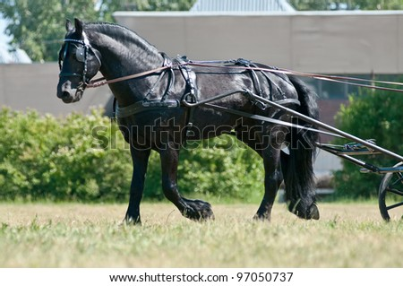 Black friesian horse carriage driving trotting on the meadow - stock photo