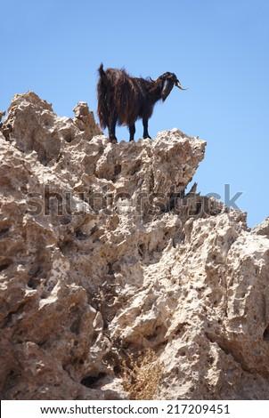 Black goat in a rock. Crete. Greece. Vertical - stock photo