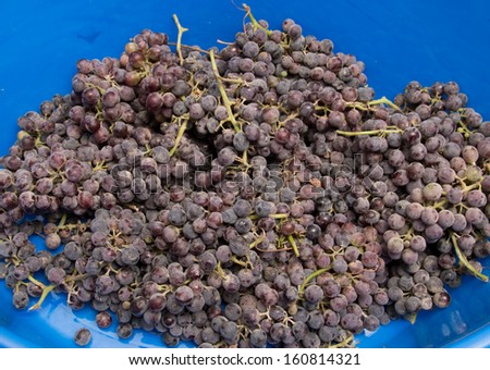 black grapes on a blue background