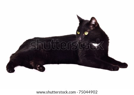 Black green-eyed cat lying isolated on white background - stock photo