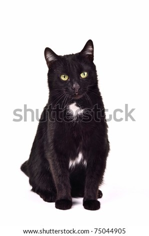 Black green-eyed cat sitting against white background - stock photo