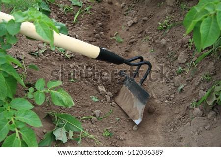 Black Hoe On White Wooden Sticks, Potato Hilling. Caring For Garden Herbts.  Garden